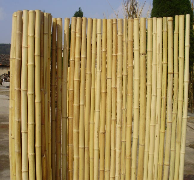 Canisse Bambous Ronds 2 X 2 M 90 Occultant Leroy Merlin